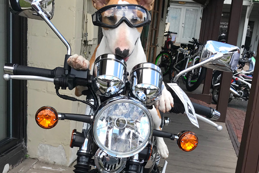 Dog with goggles sitting on a motorcycle